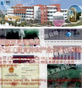 上海交通大学-疟疾克星青蒿组织研磨破碎